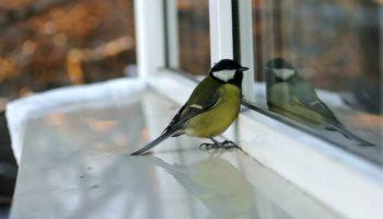 Птица стучится в окно — к чему это примета?