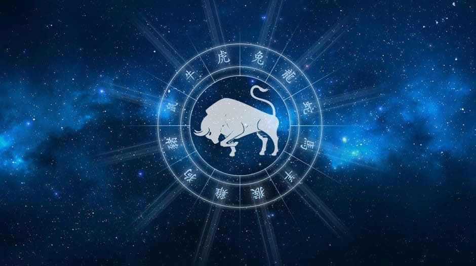 Бык гороскоп