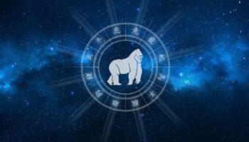 Восточный гороскоп на 2021 год для Обезьяны мужчины