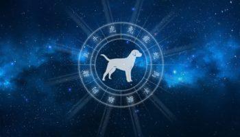 Восточный гороскоп на 2021 год для Собаки мужчины